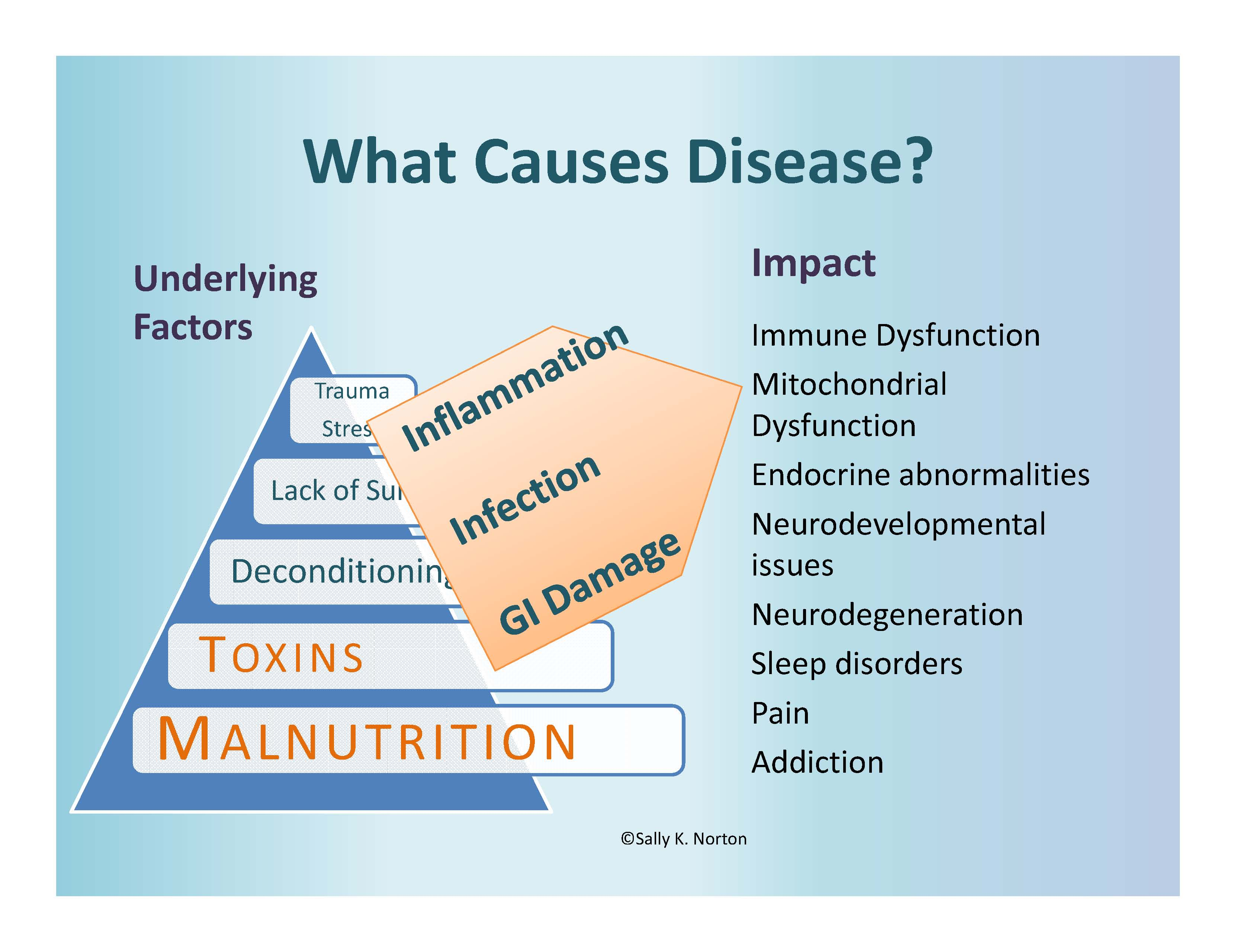 Underlying disease factors listed in a pyramid, which casue the proesses of inflammation, infection and GI damage, which lead to list of medial problems