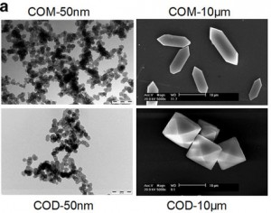 Electron Micrope images of Nano-sized (left) and micron sized (right) calcium oxalate crystals Sun (2015)
